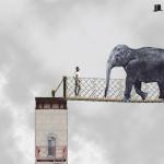 iPhone5-Elephant Bridge